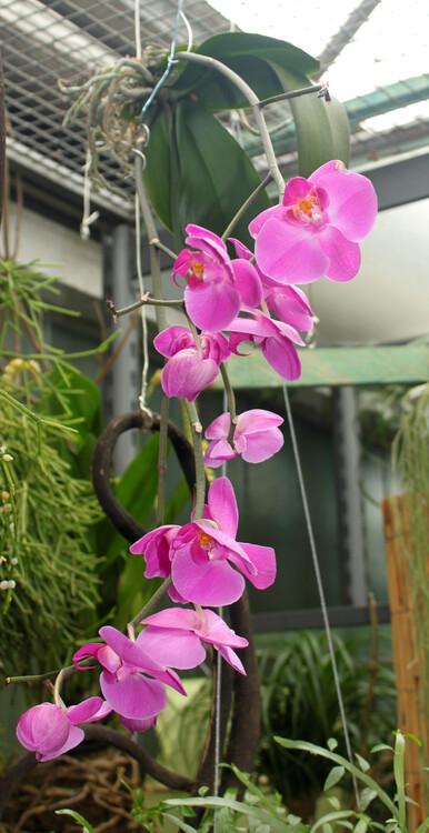 orchideenpflege ist keine zauberei tipps von blumen. Black Bedroom Furniture Sets. Home Design Ideas