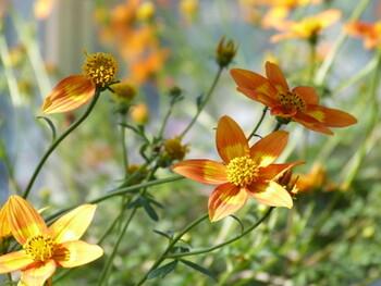 Blumen Schwarz
