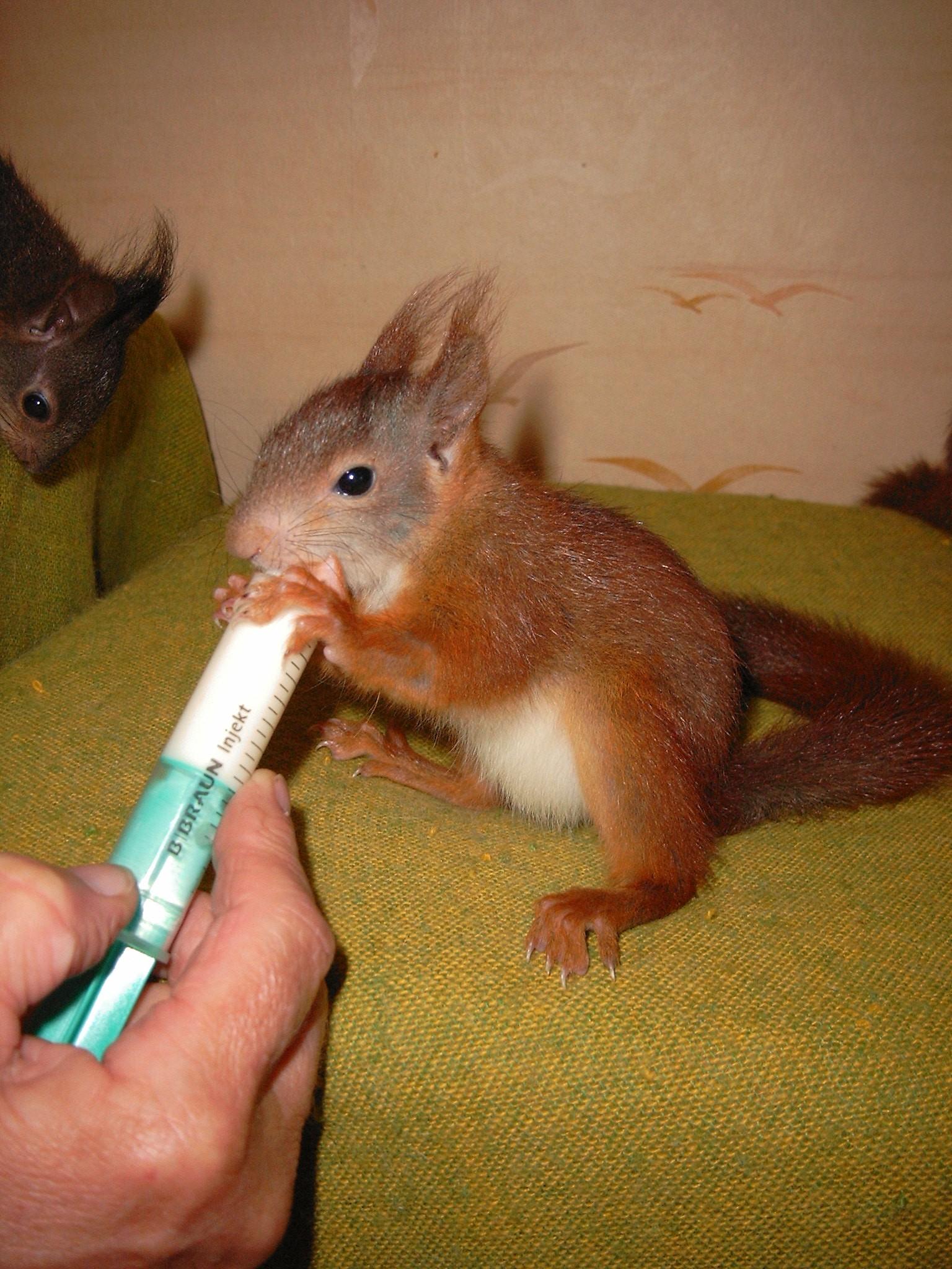 nüsse für eichhörnchen benötigt  nürnberg  meiermagazinde