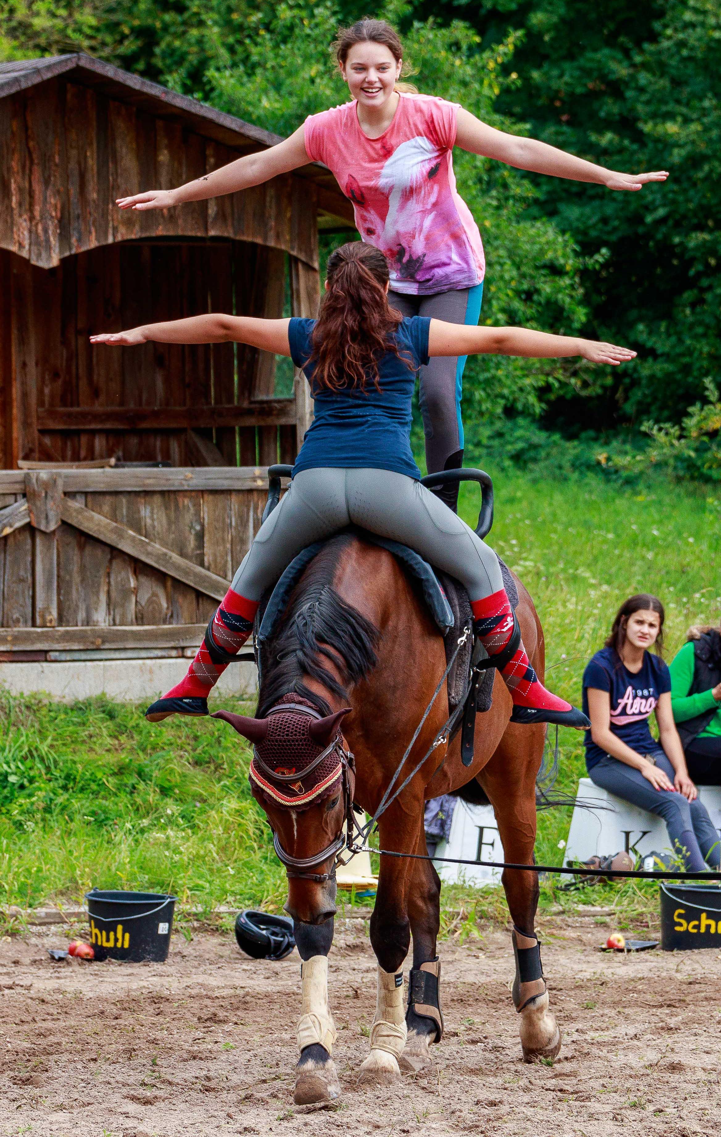 Pferd Turnen
