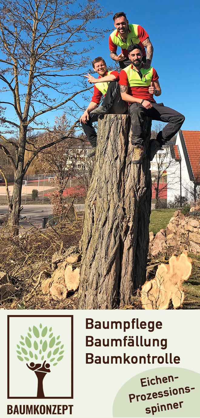 Baumpflege Baumkonzept GmbH